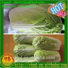 2015 Nueva col cosechada fresca / semilla de repollo chino