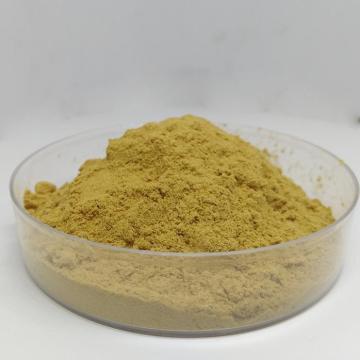 Eurycoma longifolia extract Tongkat Ali powder