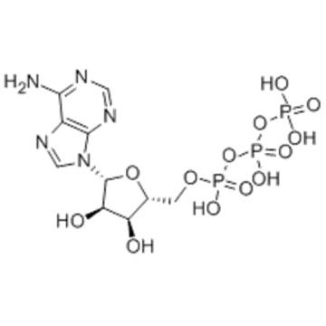 Adenosine triphosphate CAS 56-65-5
