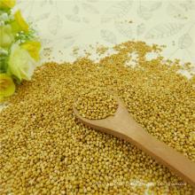 Machine Pick Millet jaune dans Husk 2012