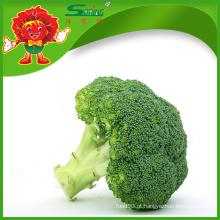 Atacado Brócolis naturais congelados verde brócolis