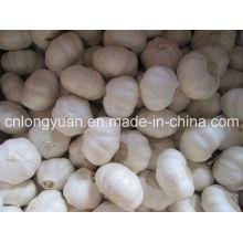 Ail blanc chinois avec une bonne qualité