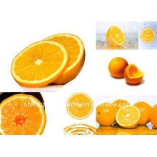 ausgezeichnet Süß frische Orangenfrüchte