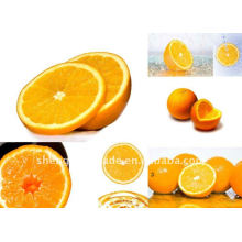 excelente doce laranja frutas frescas