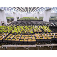 Top for Greenhouse Seedling Bed Rolling greenhouse benches tables  Seeding Nursery Bed export to Norway Exporter