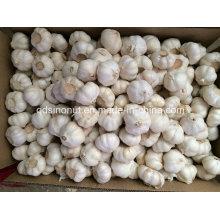 Paleta de cartón de 10 kg de ajo fresco blanco puro