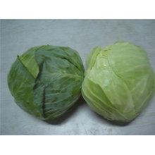 fresh round cabbage