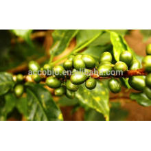 Natürlicher grüner Kaffeebohnenextrakt (Coffea Arabica L), Chlorogensäure 30%, 45%, 50%, 60%