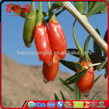 Goji berry onde comprar goji berries sale wolfberry health benefits