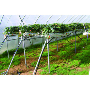 Table-top Strawberry Growing System