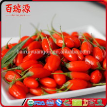 Atacado 2016 Ningxia Goji berry sem SO2