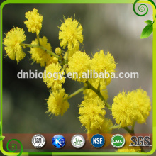 natural cacia rigidula extract powder/acacia rigidula extract 10:1, 20:1