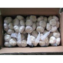 2015 Chinese fresh crop garlic