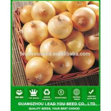 Prix de graines d'oignon hybride de NON01 Aihuang, graines d'oignon à vendre