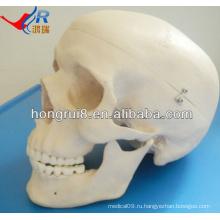 Модель расширенного человеческого образа жизни, анатомический череп