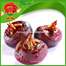 Factory supply of water chestnut with best prices