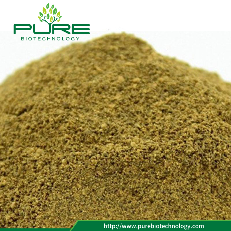 Cassia Seed Extract Powder