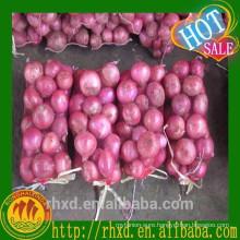 5CM-7CM Fresh Red Onion Sale Onion Types Red Onion