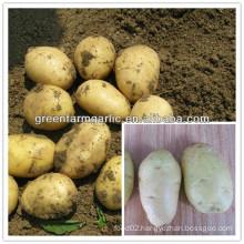 new potato price