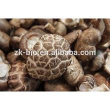 Precios para setas de shiitake secas