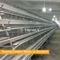 Top-Qualität und Anlagen für Geflügelzucht eine Art Batterie Hühnerkäfig für Layer