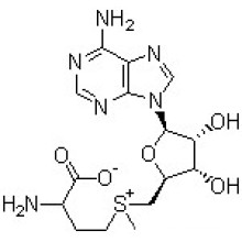 S-Adenosyl-L-Methionine