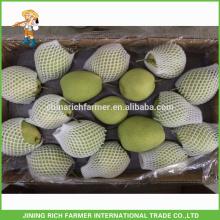 Gute Qualität Frische Shandong Birne