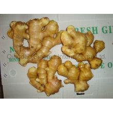 Ginger of Hot Sales