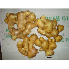Ginger of Hot Sales