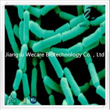 Lactobacillus Rhamnosus plus FOS Inulin Mixture