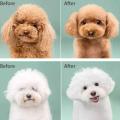 Detangling-Dog Comb and Brush Set