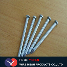 Good Quality Galvanized Concrete Steel Nails