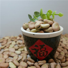 Chinese dried Broad Bean price