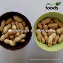 Chinese Shandong Origin Wholesale Peanuts