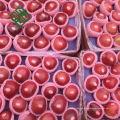 Chinesischer Fuji-Apfelpreis frischer Apfelexporteur