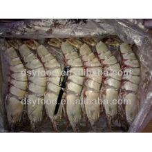Frozen HOSO Tiger Shrimp