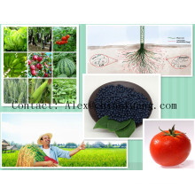 NPK 7.5-0-4 Water Soluble Fertilizer