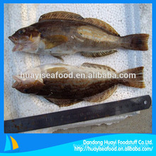 frozen fat greenling fish supplier