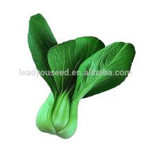PK01 DP résistant à la chaleur p1 hybride pakchoi graines, graines de colza pour la plantation