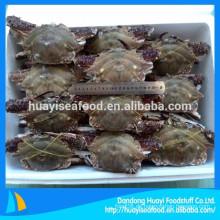Preis von 150-300g erste Rate gefrorene ganze Runde blau Schwimmen Krabbe