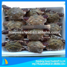 Preço de 150-300g primeira taxa congelados todo azul azul natação caranguejo