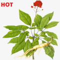 Ginseng-extract