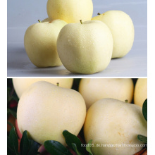 China Golden Delicious Frische Red Apple