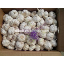 4.5cm Fresh Pure White Garlic