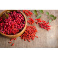 goji berry extract powder goji guarana