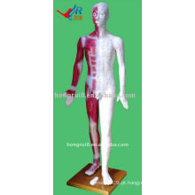 Manequim vívido de acupuntura humana de 178 cm
