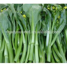 CS02 LJ 60 jours maturité précoce vert choy sum graines chinoises pour l'ensemencement