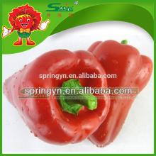 Dr pepper en gros cloche rouge
