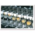 Machine à couper les œufs de haute qualité à vendre
