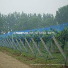 Alibaba china Más barata red de aves de cultivos de viñedo de mano al descubierto
